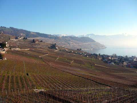 vignes de lavaux depuis grandvaux